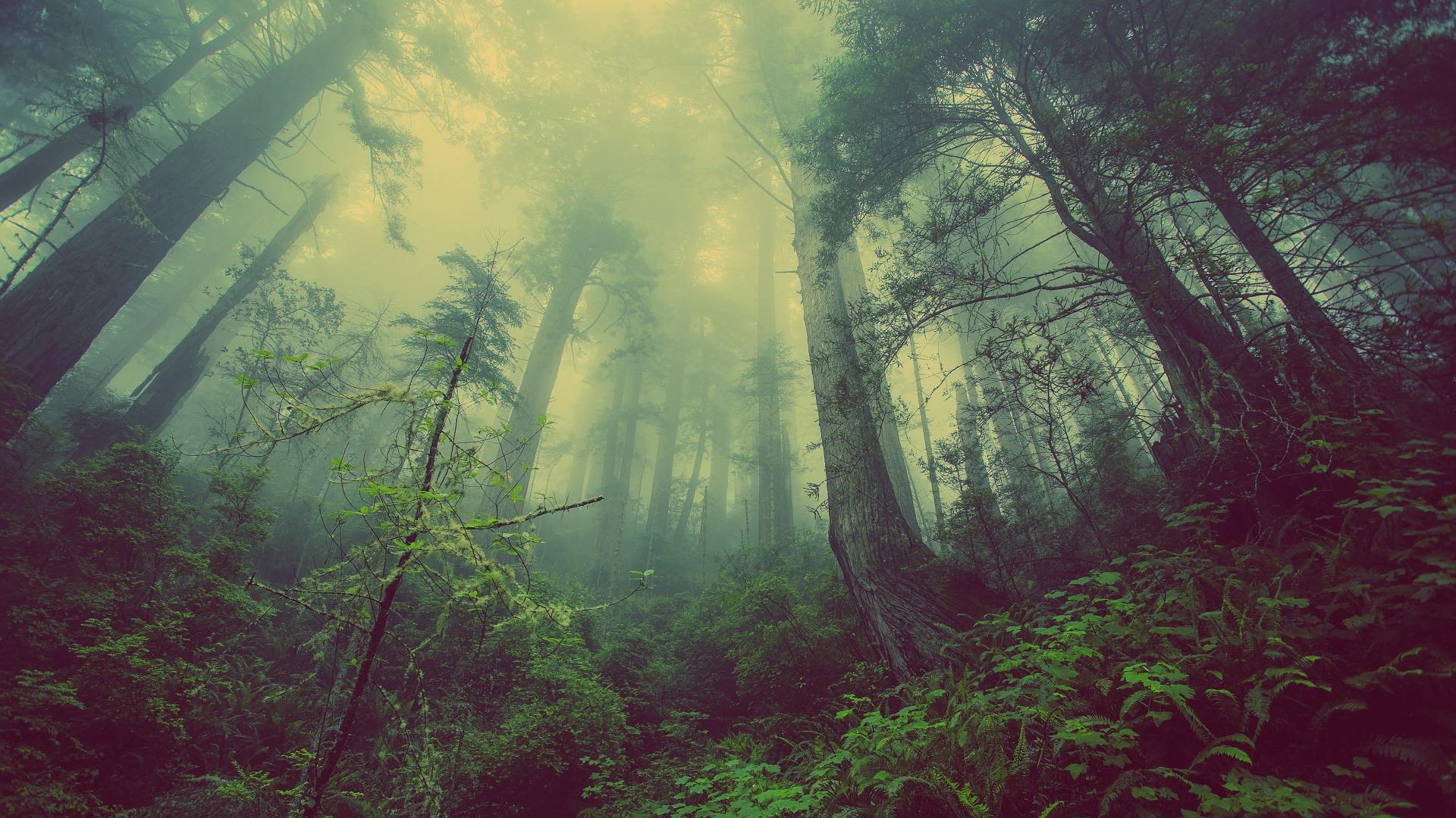 El Día Mundial del Árbol hace reflexionar sobre la explotación forestal sostenible