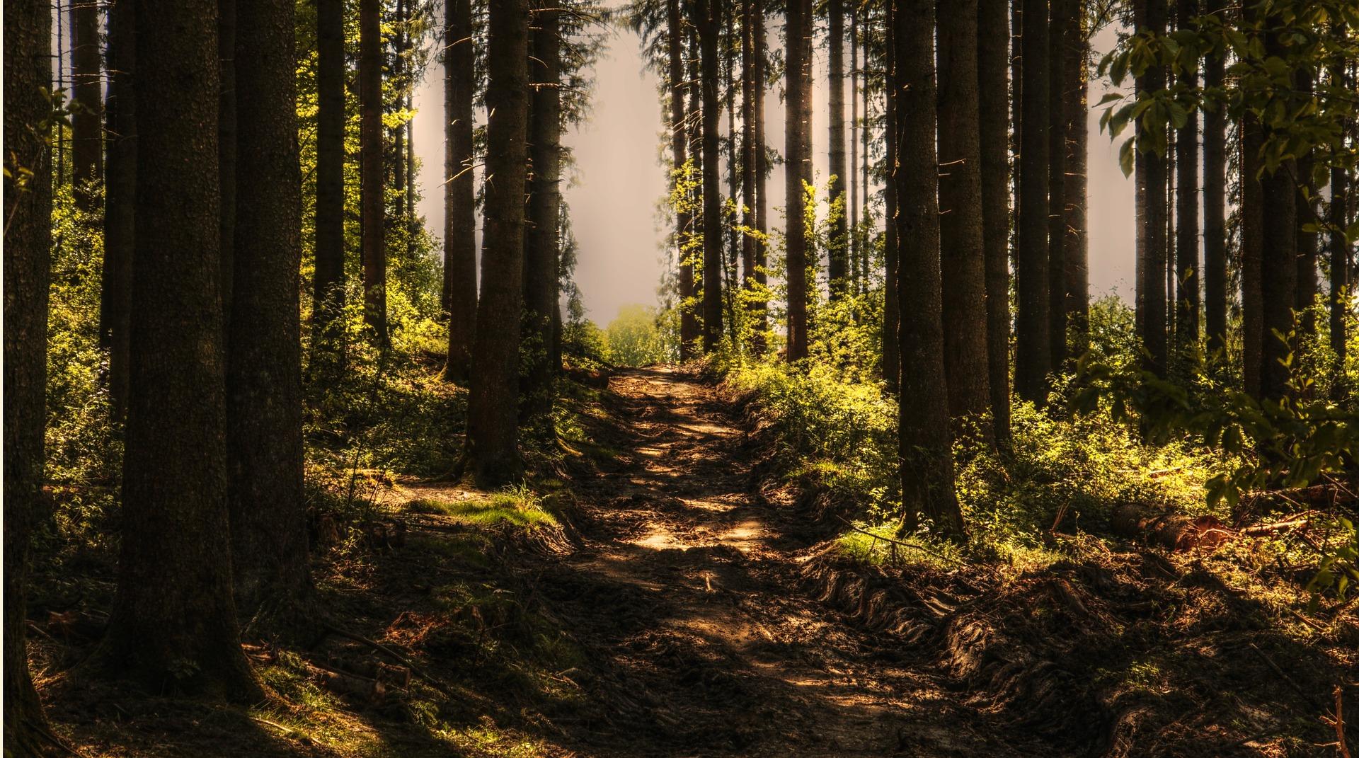 Aumenta el tejido de bosques certificados y sostenibles